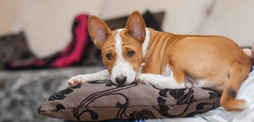 THE BEST DOGS FOR CONDO AND APARTMENT LIVING